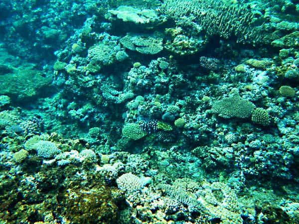 The Coral Gardens Vaka Eitu Vava U Tonga Two At Sea