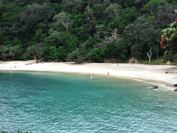 Whale Bay Matapouri, New Zealand: Top Tips Before