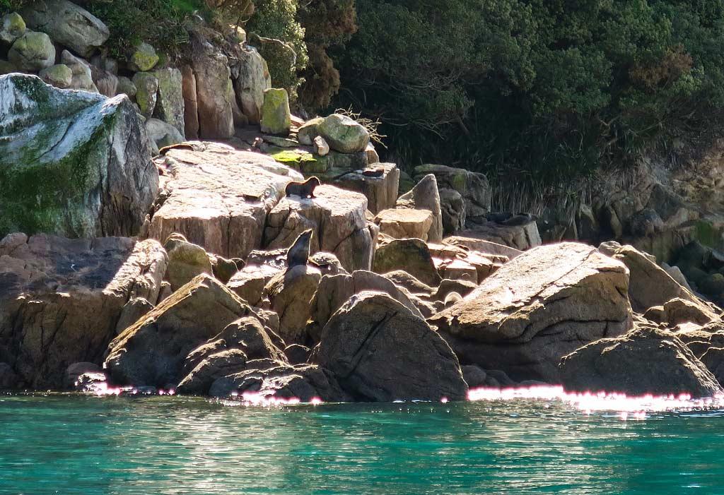 fur-seal-pups-3
