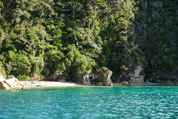 A close up of the shoreline in the Reef Point anchorage.   (Able Tasman National Park, New Zealand)